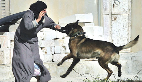 Isnt Israel doing terrorism in Palestine - Media Pictures Photos_35.jpg