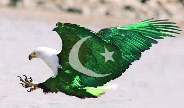 pakistan-independence-day-eagle.jpg